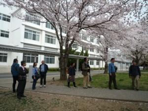 LCセンター前桜_800